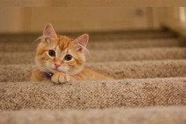 sr cat